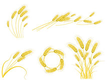 установите пшеницу Стоковое Изображение