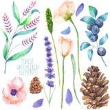 Установите, собрание с изолированными элементами леса акварели (ягодами, конусами, лавандой, wildflowers и ветвями) иллюстрация вектора