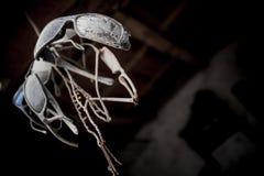 Установите солнечных очков старый и пылевоздушный веревочкой, осмотренный снизу стоковое изображение