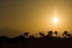 установите солнце тропическим Стоковые Изображения RF