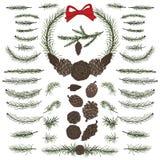 Установите сосну, елевые ветви, конусы brunswick Стоковое Изображение RF