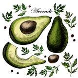 Установите с авокадоом Иллюстрация вектора