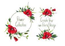 Установите с иллюстрацией красных цветков ` маков Стоковые Изображения RF