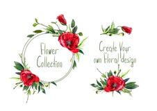 Установите с иллюстрацией красных цветков ` маков Стоковые Изображения