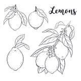 Установите с лимонами Стоковое Изображение