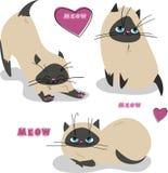 Установите с котятами siames Стоковое Фото