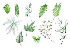 Установите с различными листьями акварели стоковое фото rf