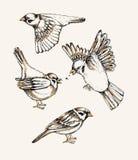 Установите с различным летанием и воробьем усаживания Нарисованная рукой красочная иллюстрация вектора Стоковая Фотография RF