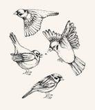 Установите с различным летанием и воробьем усаживания Нарисованная рукой иллюстрация вектора Стоковые Фотографии RF