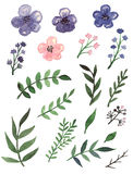Установите с цветками акварели фиолетовыми и листьями зеленого цвета бесплатная иллюстрация