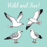 Установите с чайками на изолированной белой предпосылке Стоковые Изображения RF