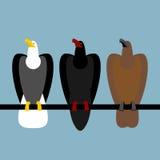 Установите хищные птиц орлов Быстрый белоголовый орлан с белой головой Стоковые Фотографии RF