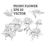 Установите цветков пиона в векторе на белой предпосылке иллюстрация вектора