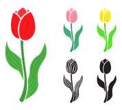 Установите цветок тюльпана иллюстрация вектора