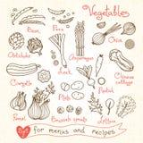 Установите чертежи овощей для меню дизайна Стоковые Фото