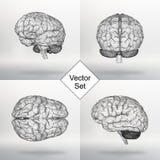 Установите человеческий мозг иллюстрации вектора Структурная решетка полигонов Абстрактная творческая предпосылка вектора концепц Стоковая Фотография