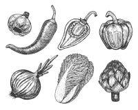 Установите элементы нарисованные рукой с овощами стиля эскиза различные перцы свеже бесплатная иллюстрация