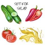 Установите для салата Огурцы, томаты, перец и оливковое масло Isolat иллюстрация штока