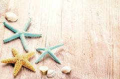 Установка лета с раковинами моря Стоковое Фото