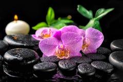 Установка зацветая цветка орхидеи сирени хворостины, зеленый цвет курорта выходит w Стоковая Фотография RF