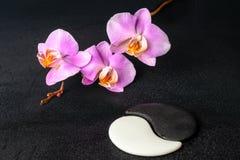 Установка курорта камней Yin-Yang и орхидеи сирени стоковое изображение rf