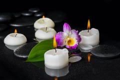Установка курорта фиолетового dendrobium орхидеи, зеленых лист с росой и Стоковая Фотография RF