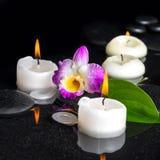 Установка курорта фиолетового dendrobium орхидеи, зеленых лист с росой и Стоковое Фото