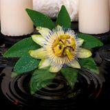 Установка курорта цветка пассифлоры, зеленых лист с падением, полотенец Стоковая Фотография