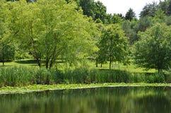 Установка пруда лета ботанического сада Корнелла Стоковые Фото