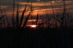 Установка Солнця за тростниками 2 Стоковые Фотографии RF