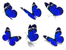 Установленные бабочки монарха Стоковые Изображения