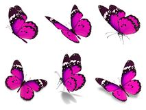 Установленные бабочки монарха Стоковая Фотография RF