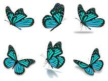 Установленные бабочки монарха Стоковое Изображение RF
