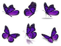 Установленные бабочки монарха Стоковые Фотографии RF