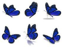 Установленные бабочки монарха Стоковое Изображение
