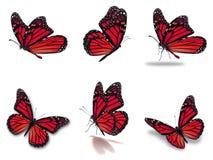 Установленные бабочки монарха Стоковые Изображения RF