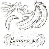 Установленные бананы Нарисованный вручную стиль иллюстрация вектора