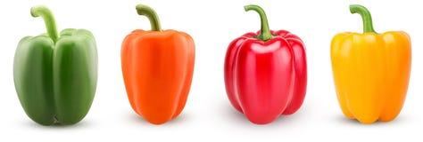 Установленные зеленые, красные, оранжевые, желтые болгарские перцы Стоковые Изображения