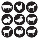 Установленные значки силуэтов животноводческих ферм Стоковые Фото