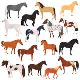 Установленные значки цвета пород лошади плоские иллюстрация вектора