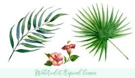Установленные листья акварели тропические Вручите вычерченную экзотическую растительность изолированную на белой предпосылке Стоковая Фотография RF