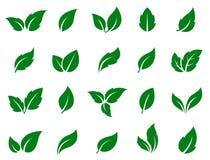 установленные листья зеленого цвета Стоковое Изображение