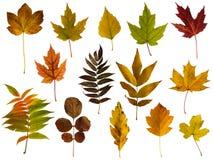 Установленные листья осени изолированными на белой предпосылке стоковое изображение rf