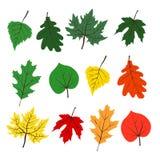 Установленные листья осени лета Стоковое Изображение RF