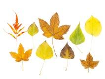 установленные листья осени собрание предпосылки осени выходит белизна Стоковое Фото