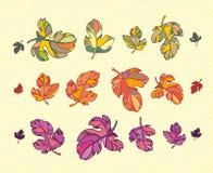 установленные листья осени цветастые Стоковая Фотография RF