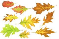 установленные листья 1 осени Стоковые Фотографии RF