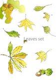 установленные листья Стоковые Фотографии RF