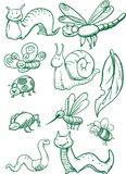 установленные насекомые Стоковое Изображение