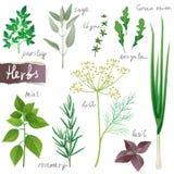 Установленные травы бесплатная иллюстрация